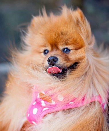 adorable-animal-breed-732456.jpg