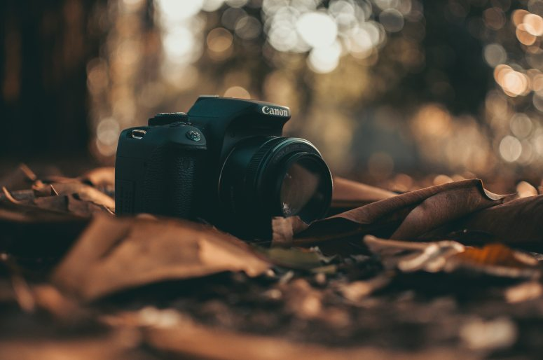 camera-canon-dry-leaves-597414.jpg